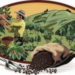 Café Seguro, una idea novedosa para proteger a los caficultores