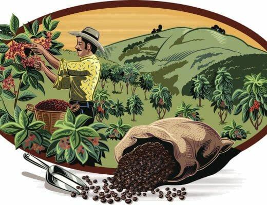 Ilustración del café