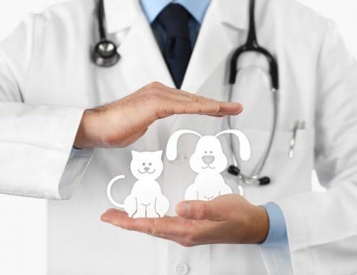 medico-veterinario-con-figuras-de-perro-y-gato