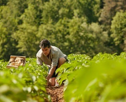 Seguro agrícola para clientes Davivienda